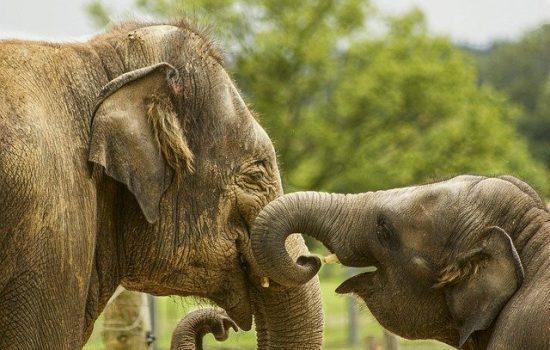 baby-elephant-5126326_640
